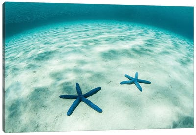 Starfish On A Brightly Lit Seafloor In The Tropical Pacific Ocean Canvas Art Print