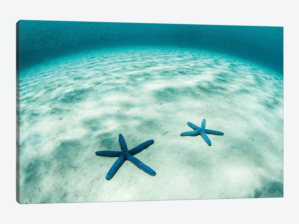 Starfish On A Brightly Lit Seafloor In The Tropical Pacific Ocean by Ethan Daniels 1-piece Canvas Print