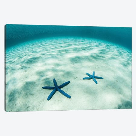 Starfish On A Brightly Lit Seafloor In The Tropical Pacific Ocean Canvas Print #TRK2079} by Ethan Daniels Canvas Print
