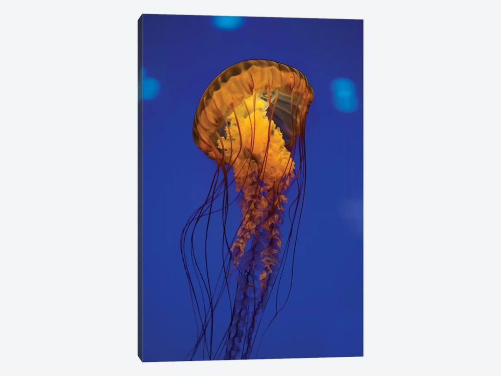 Pacific Sea Nettle Jellyfish I by Jennifer Idol 1-piece Art Print