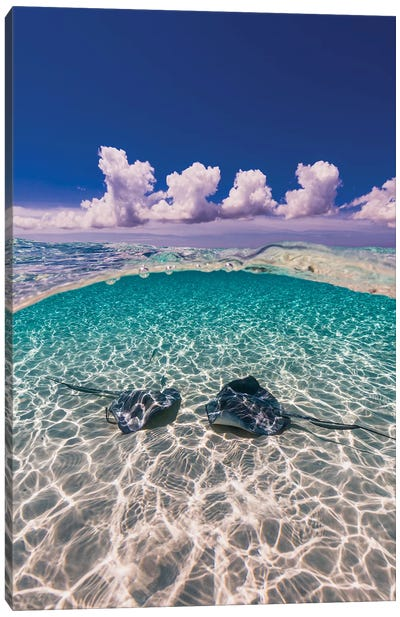 Southern Stingrays On The Sandbar In Grand Cayman, Cayman Islands II Canvas Art Print
