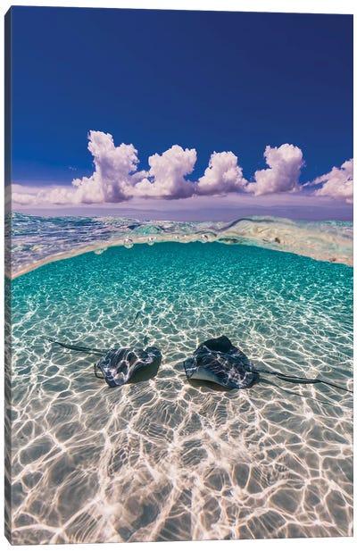 Southern Stingrays On The Sandbar In Grand Cayman, Cayman Islands II Canvas Art Print