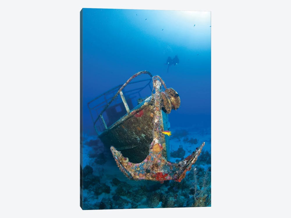 Divers Visit The Pelicano Shipwreck On The Bottom Of The Caribbean Sea by Karen Doody 1-piece Canvas Art Print