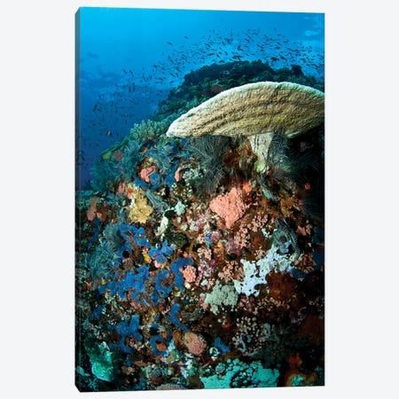 Reef Scene With Corals And Fish, Komodo, Indonesia Canvas Print #TRK2122} by Mathieu Meur Canvas Print