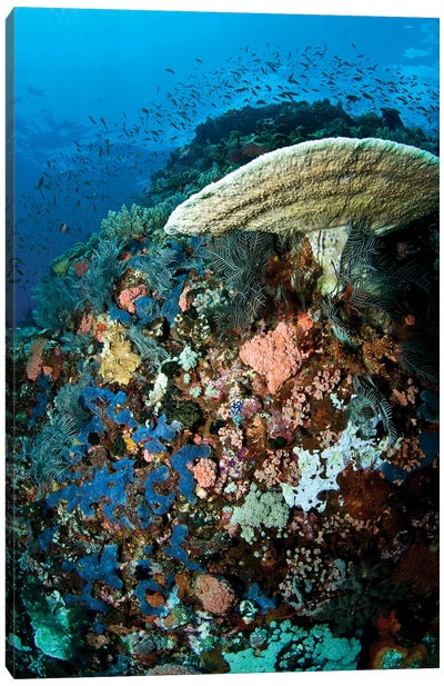 Reef Scene With Corals And Fish, Komodo, Indonesia Canvas Art Print