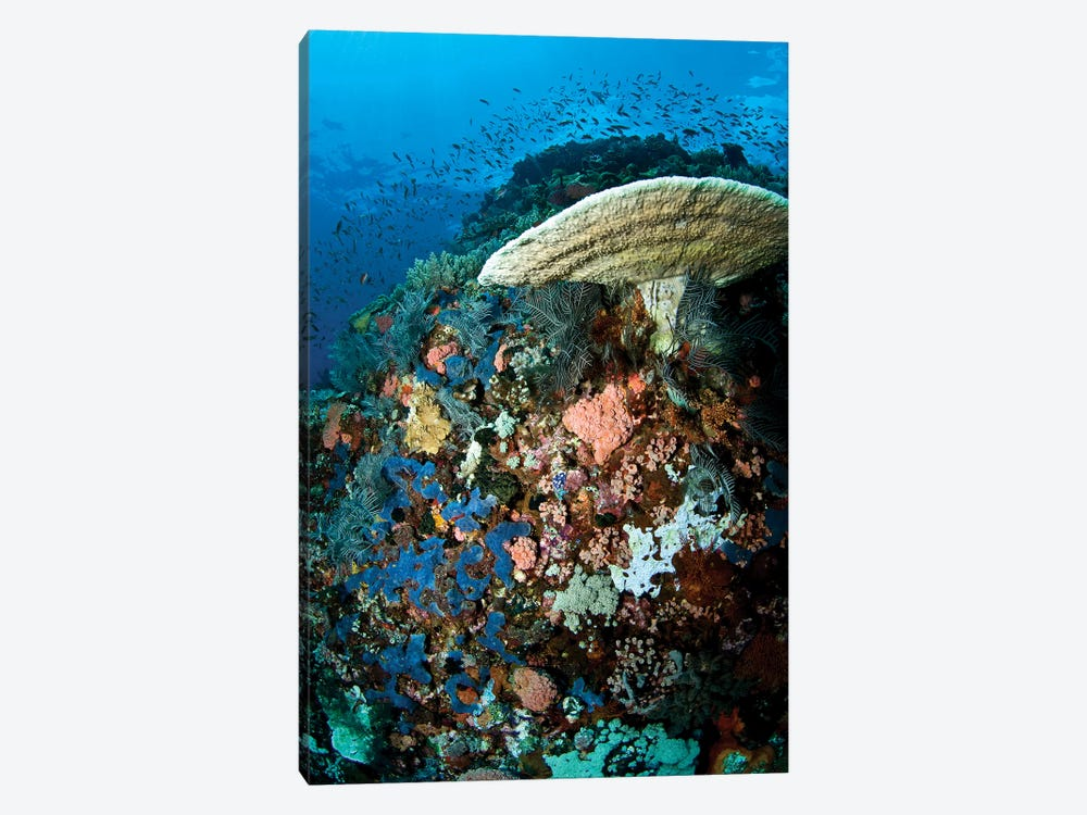Reef Scene With Corals And Fish, Komodo, Indonesia by Mathieu Meur 1-piece Canvas Wall Art