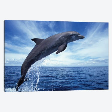 Bottlenose Dolphin In The Caribbean, Off Roatan Island, Honduras II Canvas Print #TRK2163} by VWPics Art Print