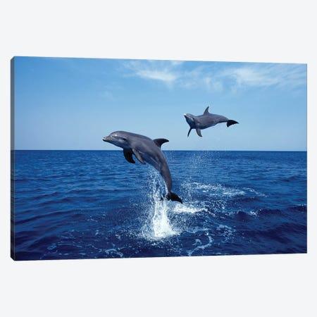 Bottlenose Dolphin In The Caribbean, Off Roatan Island, Honduras IV Canvas Print #TRK2165} by VWPics Canvas Art