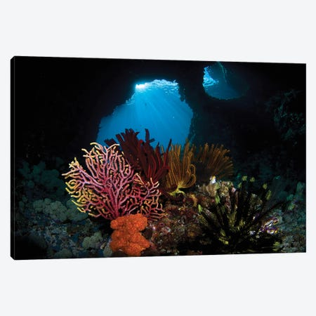 Crinoids And A Small Gorgonian Fan, Raja Ampat, Indonesia Canvas Print #TRK2173} by VWPics Canvas Art