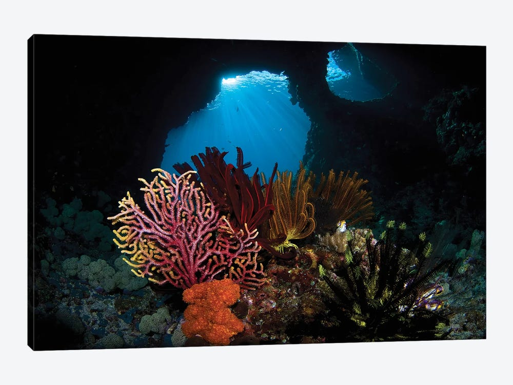 Crinoids And A Small Gorgonian Fan, Raja Ampat, Indonesia by VWPics 1-piece Canvas Art