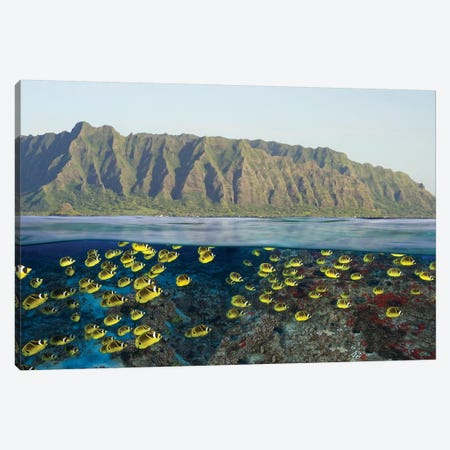 Digital Split Image Of Schooling Raccoon Butterflyfish Off Oahu, Hawaii Canvas Print #TRK2176} by VWPics Canvas Print