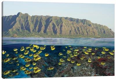Digital Split Image Of Schooling Raccoon Butterflyfish Off Oahu, Hawaii Canvas Art Print