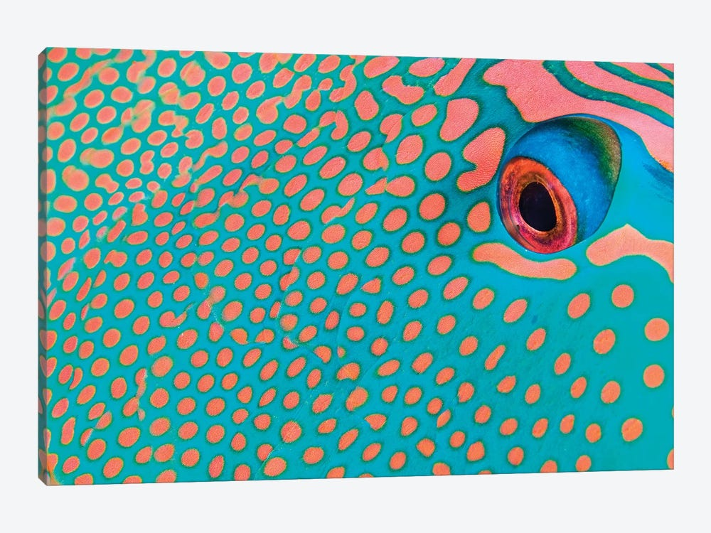 Extreme Close-Up Of The Pattern On A Bicolor Parrotfish, Indonesia by VWPics 1-piece Canvas Wall Art