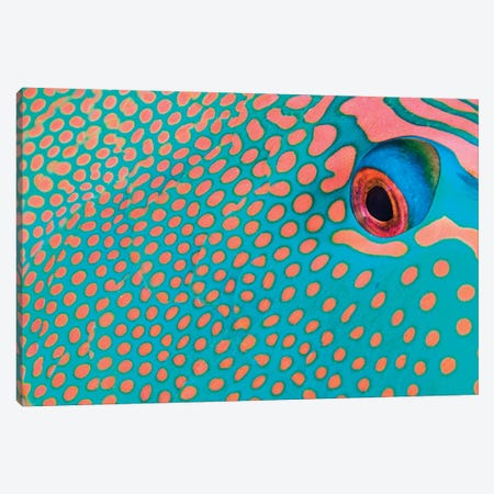 Extreme Close-Up Of The Pattern On A Bicolor Parrotfish, Indonesia Canvas Print #TRK2177} by VWPics Canvas Art Print