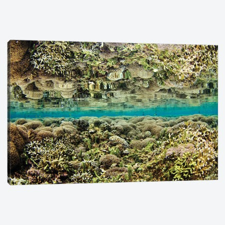 Reflection Of A Hard Coral Garden, Maluku Region, Indonesia Canvas Print #TRK2194} by VWPics Canvas Art Print