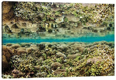 Reflection Of A Hard Coral Garden, Maluku Region, Indonesia Canvas Art Print