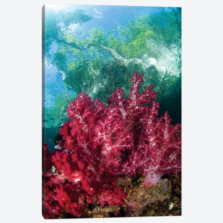Soft Coral Grows In The Shallows Under The Mangroves In Raja Ampat, Indonesia Canvas Print #TRK2197} by VWPics Art Print