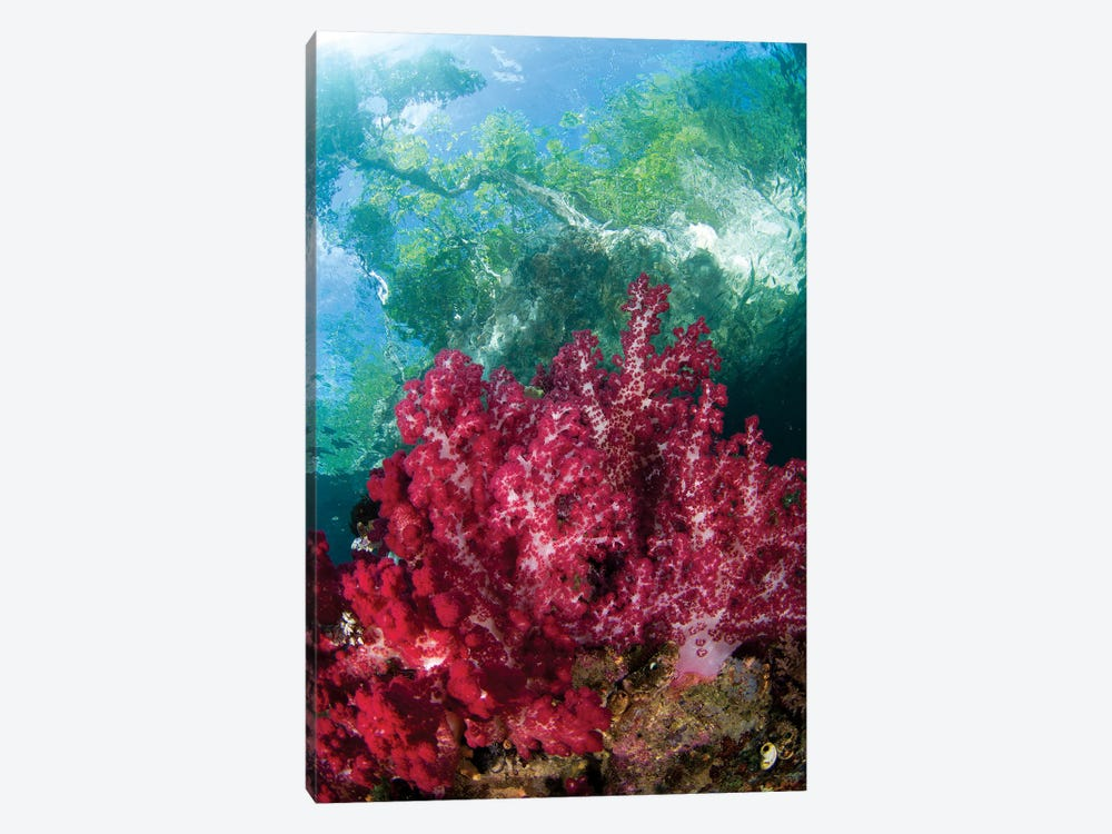 Soft Coral Grows In The Shallows Under The Mangroves In Raja Ampat, Indonesia by VWPics 1-piece Canvas Art