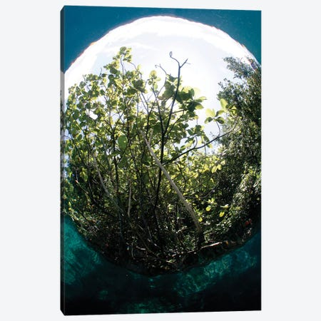 The Snell's Window Effect From A Fisheye Lens Under The Surface Photographing A Tree Canvas Print #TRK2202} by VWPics Canvas Artwork
