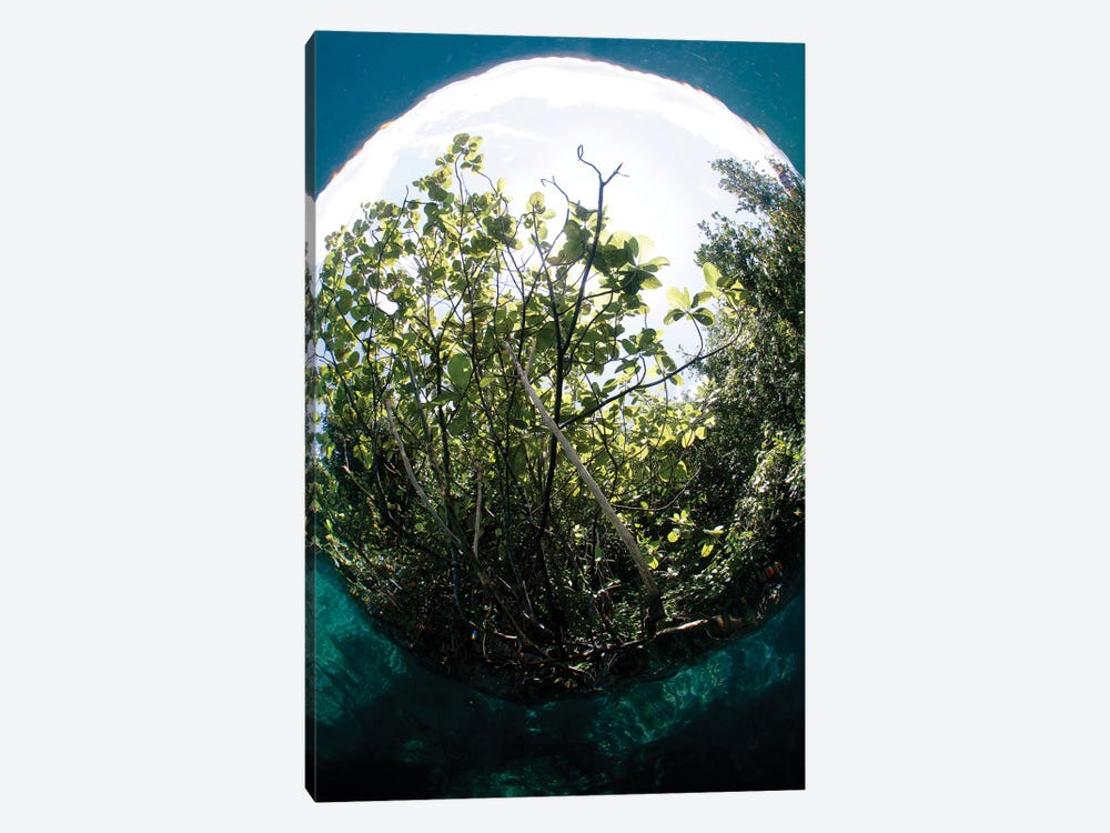The Snell's Window Effect From A Fisheye Lens Under The Surface Photographing A Tree by VWPics 1-piece Canvas Art
