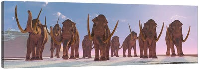 A Herd Of Columbian Mammoths Migrate To A Warmer Climate Canvas Art Print