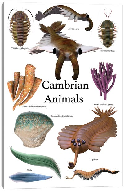 Poster Of Prehistoric Animals During The Cambrian Period Canvas Art Print