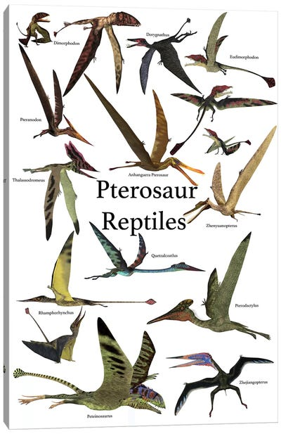 Poster Of Various Flying Pterosaur Reptiles During The Prehistoric Age Canvas Art Print