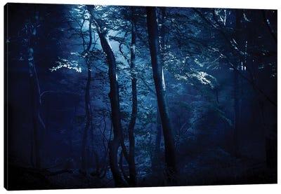 A Dark, Misty Forest, Liselund Slotspark, Denmark. Canvas Art Print