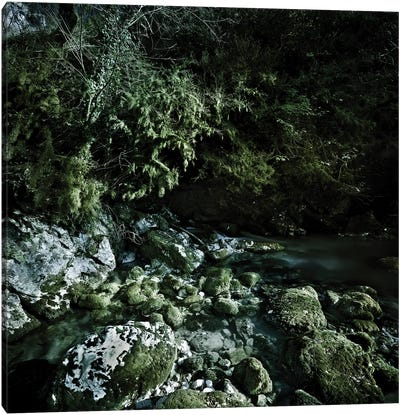 Aged Boulders Covered With Moss In A Forest, Ritsa Nature Reserve. Canvas Art Print
