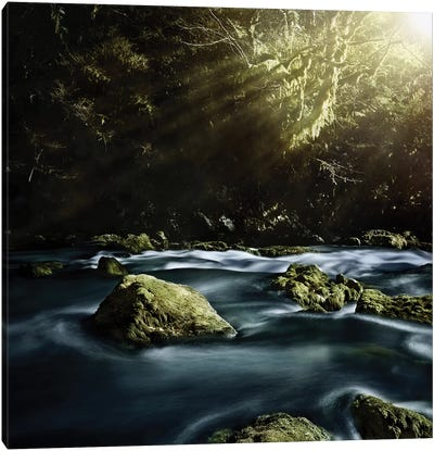 Aged Boulders Covered With Moss In A Misty Forest, Ritsa Nature Reserve. Canvas Art Print