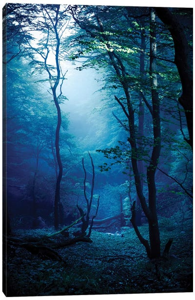 Misty, Dark Forest, Liselund Slotspark, Denmark. Canvas Art Print