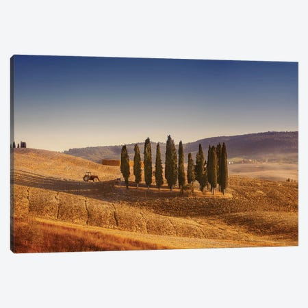 Small Isle Of Cypress Trees In A Field In The Evening, Tuscany, Italy Canvas Print #TRK2534} by Evgeny Kuklev Canvas Print