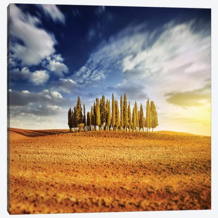Sunset In A Golden Field With A Row Of Cypress Trees, Italy, Tuscany Canvas Print #TRK2561} by Evgeny Kuklev Art Print