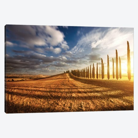 Sunset In A Golden Field With An Alley Of Cypress Trees, Tuscany, Italy Canvas Print #TRK2562} by Evgeny Kuklev Canvas Art Print