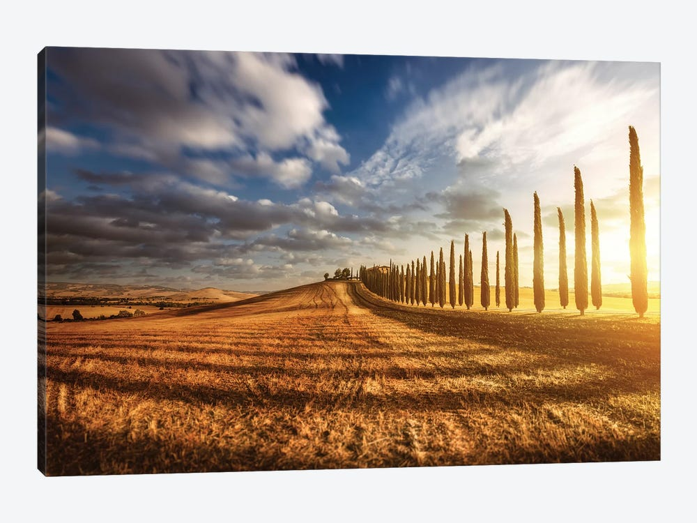 Sunset In A Golden Field With An Alley Of Cypress Trees, Tuscany, Italy by Evgeny Kuklev 1-piece Art Print