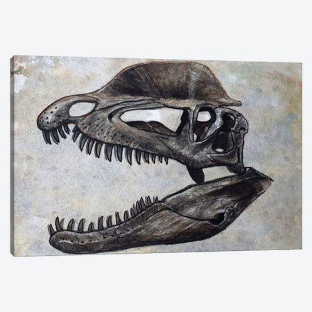 Dilophosaurus Dinosaur Skull Canvas Print #TRK2617} by Harm Plat Canvas Art