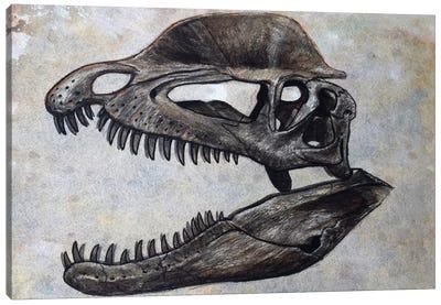 Dilophosaurus Dinosaur Skull Canvas Art Print
