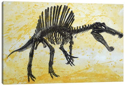 Spinosaurus Dinosaur Skeleton Canvas Art Print