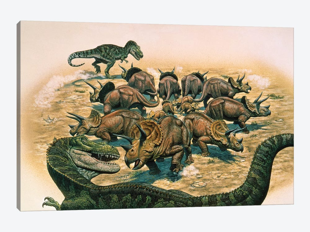 A Herd Of Triceratops Defend Their Territory Against A Pair Of Tyrannosaurus Rex by Mark Hallett 1-piece Canvas Wall Art