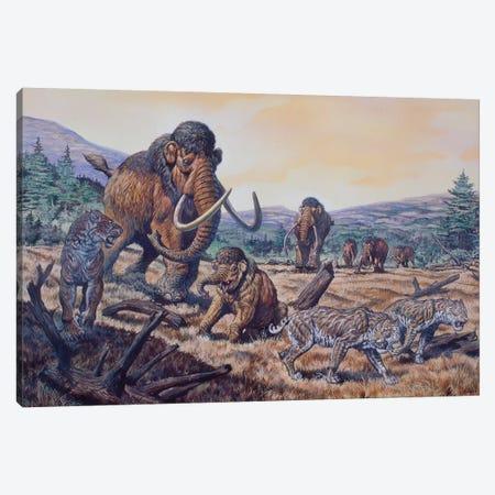 A Herd Of Woolly Mammoth And Scimitar Sabertooth, Pleistocene Epoch 3-Piece Canvas #TRK2662} by Mark Hallett Canvas Artwork