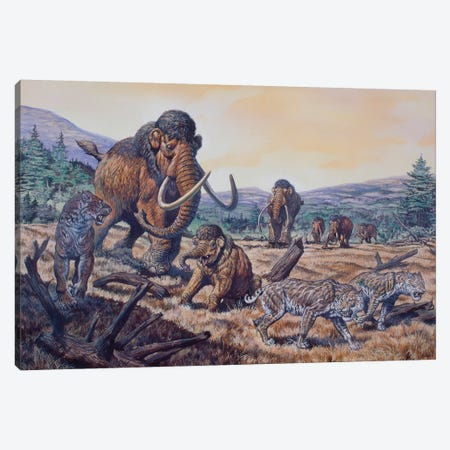 A Herd Of Woolly Mammoth And Scimitar Sabertooth, Pleistocene Epoch Canvas Print #TRK2662} by Mark Hallett Canvas Artwork