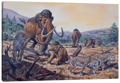 A Herd Of Woolly Mammoth And Scimitar Sabertooth, Pleistocene Epoch Canvas Art Print