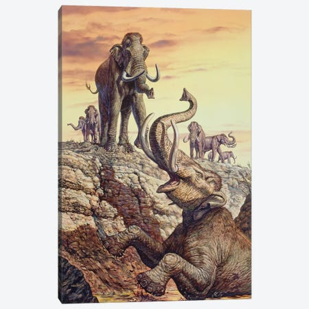 Columbian Mammoth Trapped In A Sinkhole Canvas Print #TRK2670} by Mark Hallett Canvas Art Print