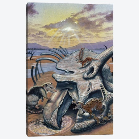 Triceratops Skull With Early Mammals 3-Piece Canvas #TRK2681} by Mark Hallett Canvas Art