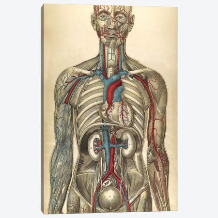 The Human Body With Superimposed Colored Plates I Canvas Print #TRK2698} by National Library of Medicine Canvas Print