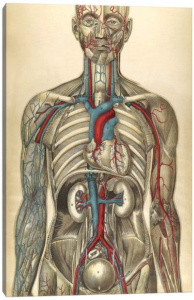 The Human Body With Superimposed Colored Plates I Canvas Art Print