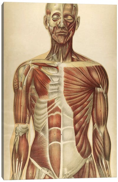 The Human Body With Superimposed Colored Plates II Canvas Art Print