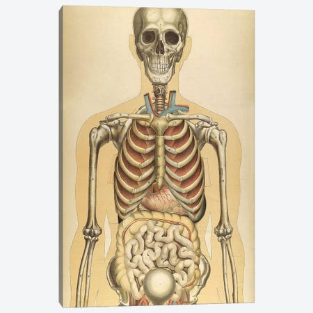 The Human Body With Superimposed Colored Plates III Canvas Print #TRK2700} by National Library of Medicine Art Print