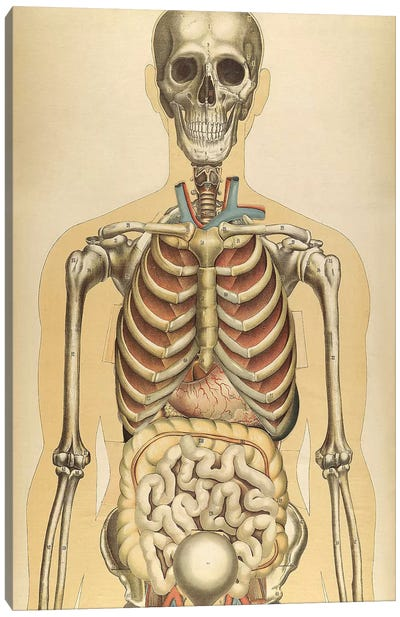 The Human Body With Superimposed Colored Plates III Canvas Art Print