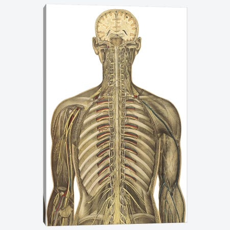 The Human Body With Superimposed Colored Plates V Canvas Print #TRK2702} by National Library of Medicine Art Print